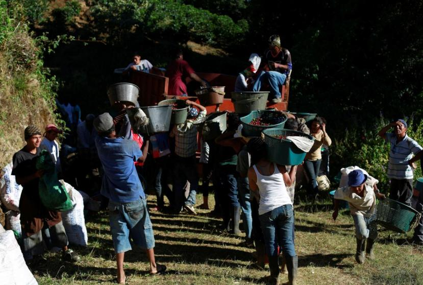 FILE PHOTO: Coffee pickers carry their freshly harvested coffee beans to be weighed on a plantation in San Isidro de Alajuela