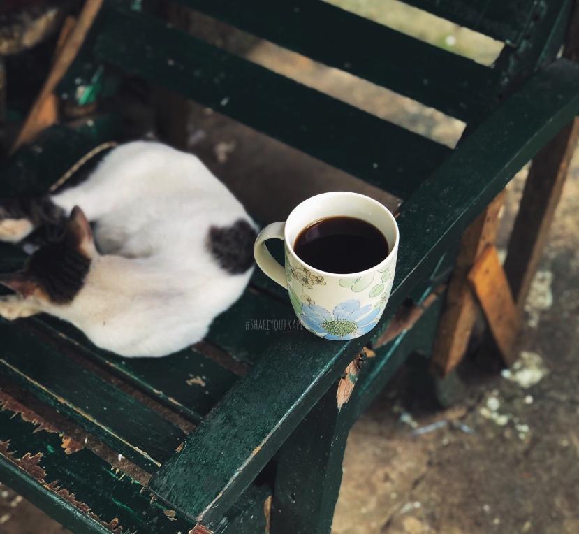 #shareyourkape #kapesaumaga #whentodrinkcoffee #coffeecat
