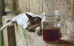#shareyourkape #auduncoffee #coffeecat
